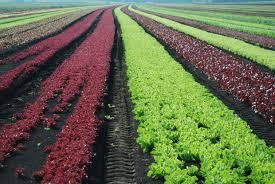 finanziamenti europei agricoltura