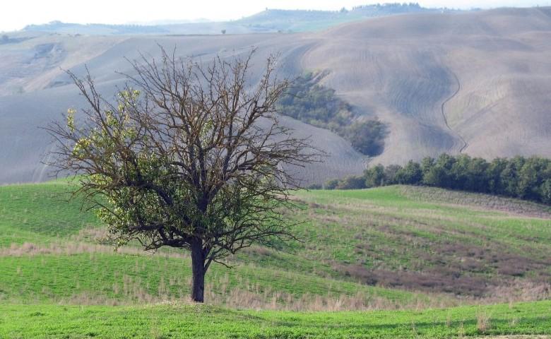 finanziamenti europei agricoltura veneto