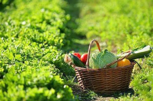 fondi ue per l'agricoltura