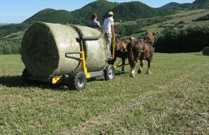 attività agricola